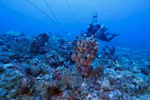 A diver checks out the coral cover during an expedition at Benham Rise last May 2016. (Oceana Philippines)