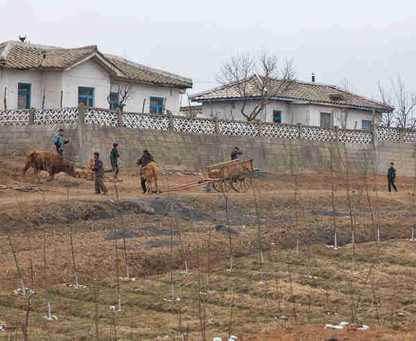 Farm workers in North Korea (Michael Havis)