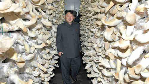 Kim Jong-un at a mushroom farm (AFP/KCNA)